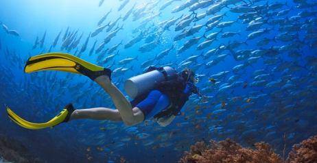 immersione e snorkling indimenticabili
