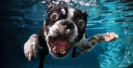 I cani sotto l'acqua