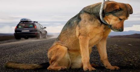 Segnala un cane abbandonato