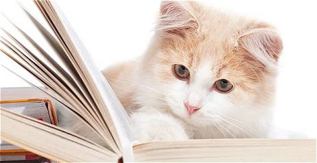 I libri più belli di sempre