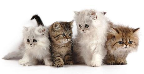 Dare cibo ai gatti randagi